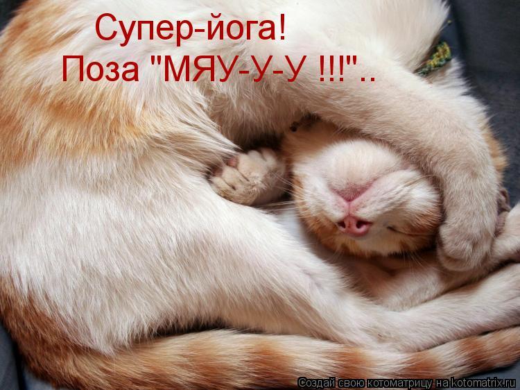 """Котоматрица: Супер-йога! Поза """"МЯУ-У-У !!!"""".."""