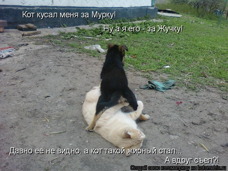 Котоматрица: Кот кусал меня за Мурку! Ну а я его - за Жучку! Давно её не видно, а кот такой жирный стал... А вдруг съел?!