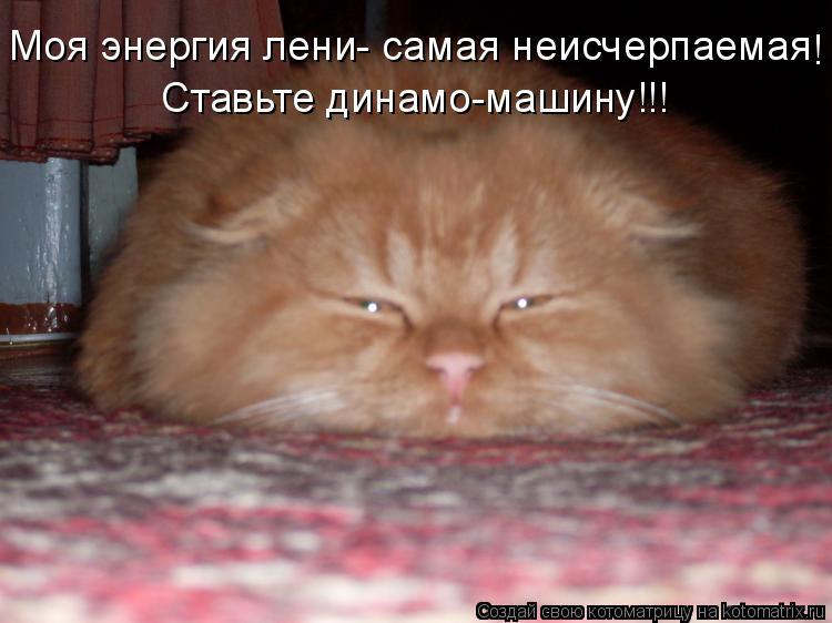 Котоматрица: Моя энергия лени- самая неисчерпаемая ! Ставьте динамо-машину!!!
