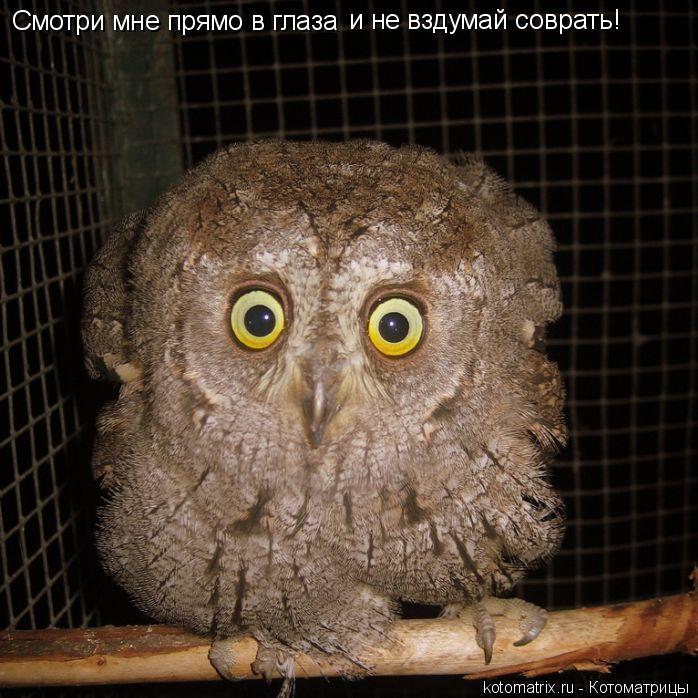 Котоматрица: Смотри мне прямо в глаза  и не вздумай соврать!