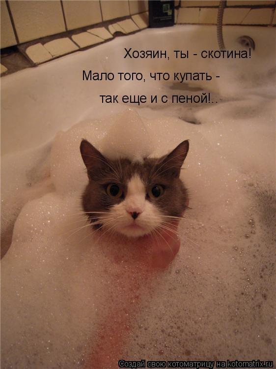Котоматрица: Хозяин, ты - скотина! Мало того, что купать - так еще и с пеной!..