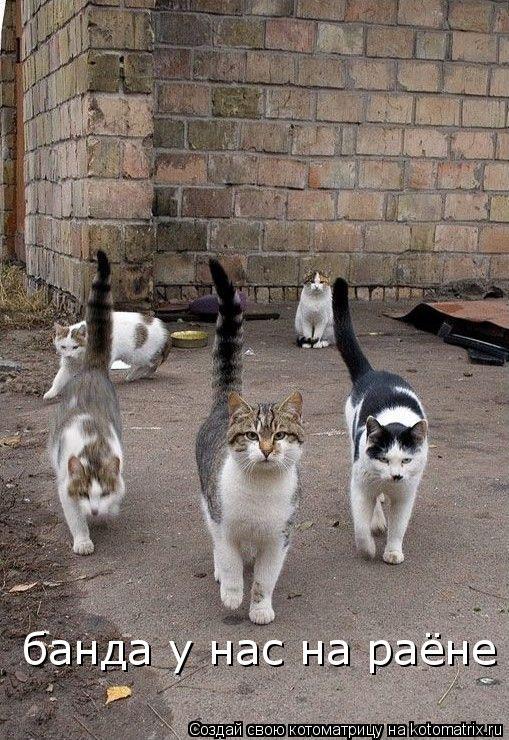 Котоматрица: банда у нас на раёне