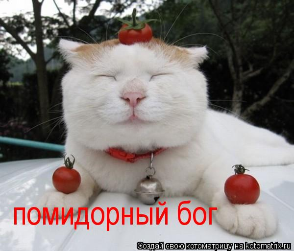 Котоматрица: помидорный бог