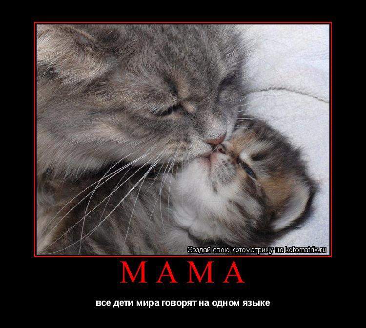 Котоматрица: мама все дети мира говорят на одном языке