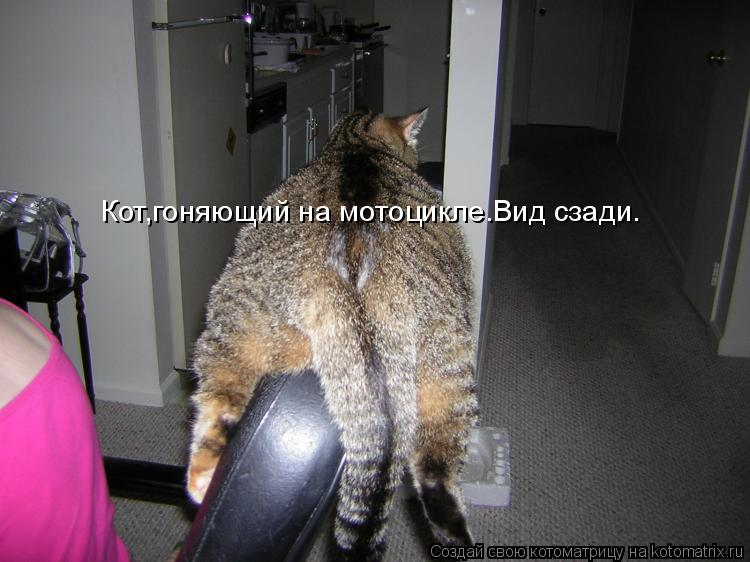 Котоматрица: Кот,гоняющий на мотоцикле.Вид сзади.