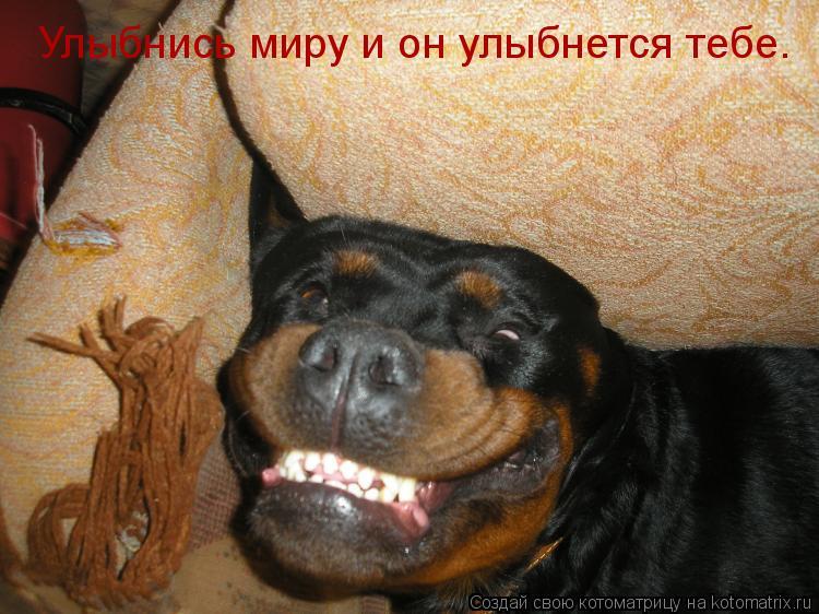 Котоматрица: Улыбнись миру и он улыбнется тебе.