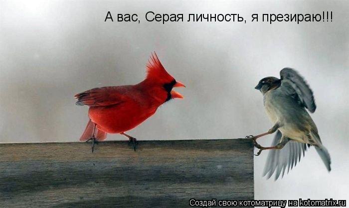 Котоматрица: А вас, Серая личность, я презираю!!!