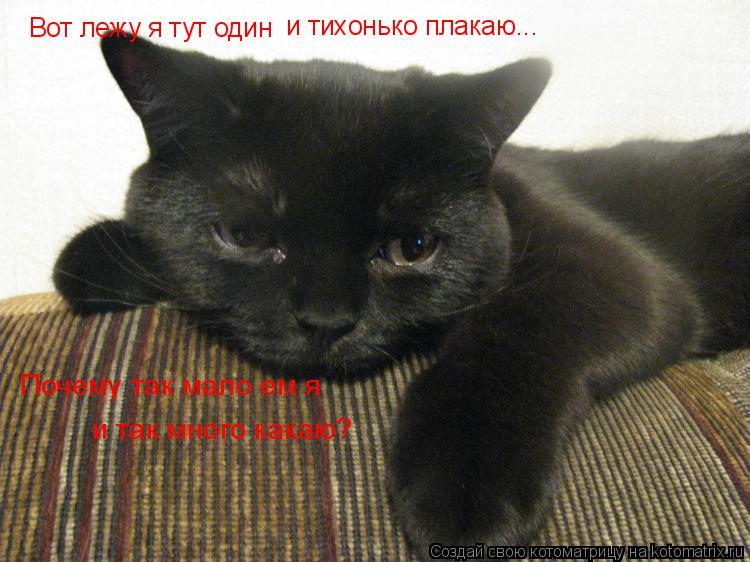 Котоматрица: Вот лежу я тут один и тихонько плакаю... Почему так мало ем я и так много какаю?