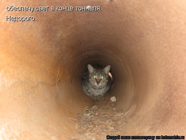 Котоматрица: обеспечу свет в конце тоннеля.  Недорого.