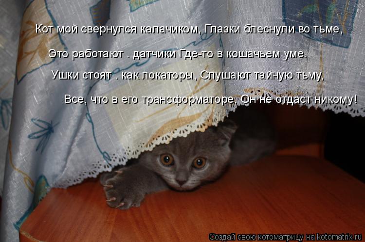 Котоматрица: Кот мой свернулся калачиком, Глазки блеснули во тьме,  Это работают – датчики Где-то в кошачьем уме.  Ушки стоят – как локаторы, Слушают тайн