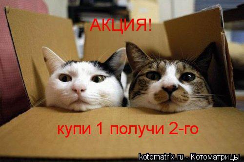 Котоматрица: АКЦИЯ! купи 1 получи 2-го