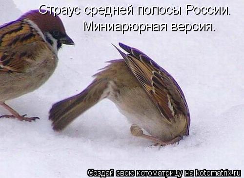 Котоматрица: Страус средней полосы России. Миниарюрная версия.
