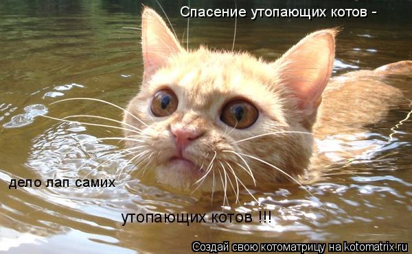 Котоматрица: Спасение утопающих котов - дело лап самих утопающих котов !!!