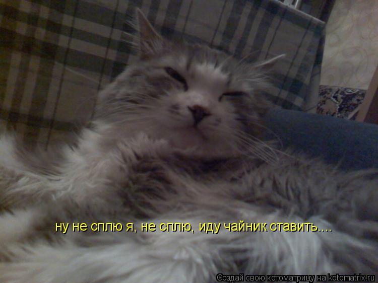 Котоматрица: ну не сплю я, не сплю, иду чайник ставить....