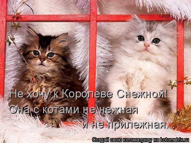 Котоматрица: Не хочу к Королеве Снежной! Она с котами не нежная и не прилежная...