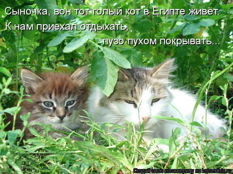 Котоматрица: Сыночка, вон тот голый кот в Египте живёт. К нам приехал отдыхать,  пузо пухом покрывать...