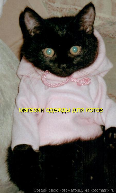 Котоматрица: магазин одежды для котов