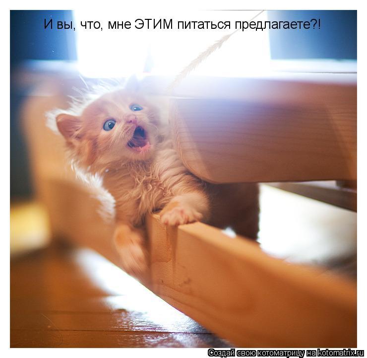 Котоматрица: И вы, что, мне ЭТИМ питаться предлагаете?!