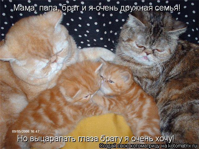Котоматрица: Мама, папа, брат и я-очень дружная семья! Но выцарапать глаза брату я очень хочу!