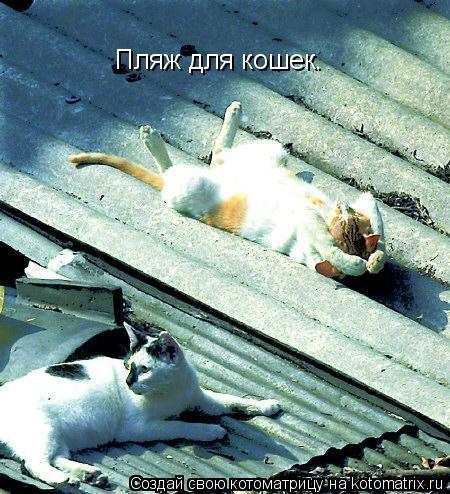 Котоматрица: Пляж для кошек.