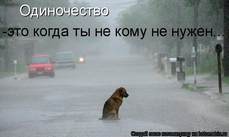 Котоматрица: Одиночество -это когда ты не кому не нужен...