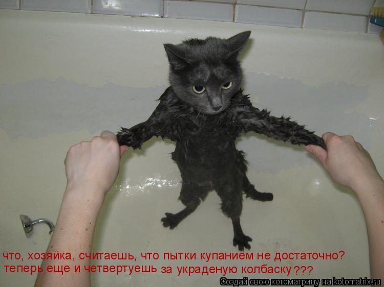 Котоматрица: что, хозяйка, считаешь, что пытки купанием не достаточно? теперь еще и четвертуешь за украденую колбаску ???