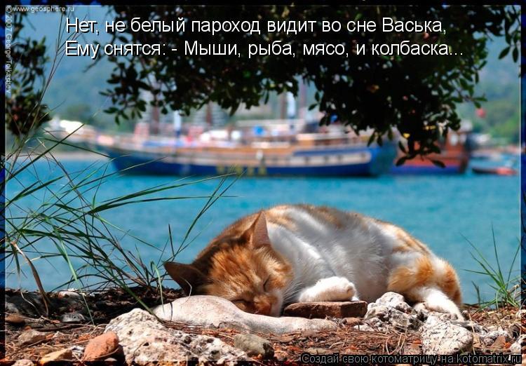 Котоматрица: Нет, не белый пароход видит во сне Васька,  Ему снятся: - Мыши, рыба, мясо, и колбаска...
