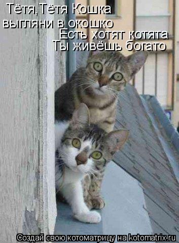 Котоматрица: Тётя,Тётя Кошка  выгляни в окошко Есть хотят котята Ты живёшь богато