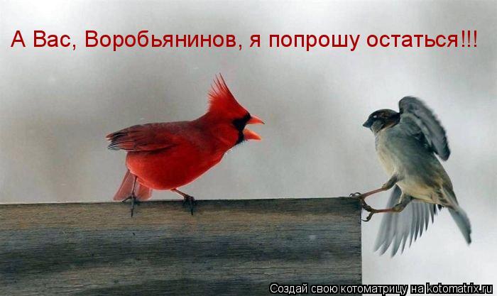 Котоматрица: А Вас, Воробьянинов, я попрошу остаться!!!