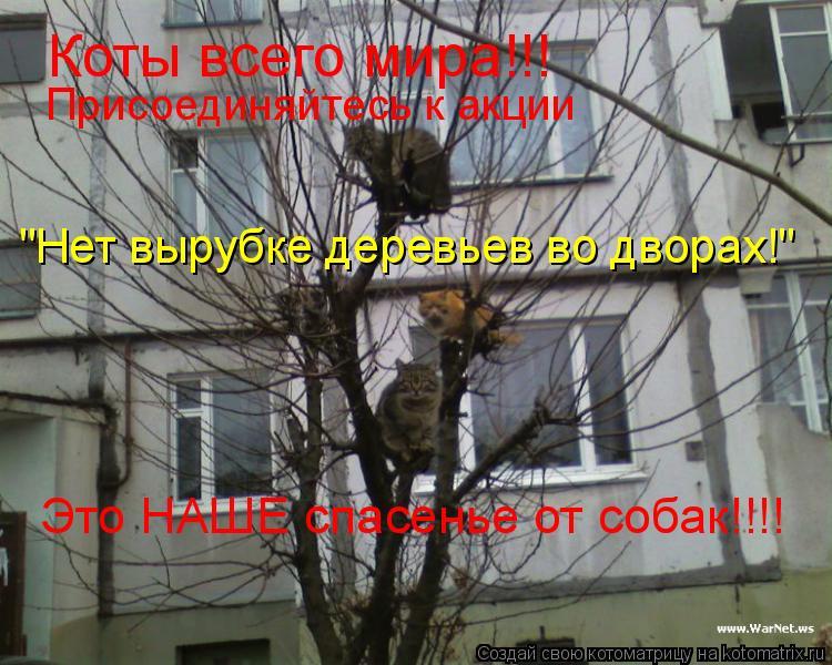 """Котоматрица: Коты всего мира!!! Присоединяйтесь к акции """"Нет вырубке деревьев во дворах!"""" Это НАШЕ спасенье от собак!!!!"""