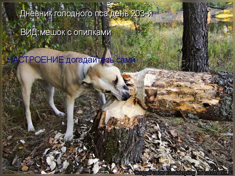 Котоматрица: ВИД:мешок с опилками НАСТРОЕНИЕ:догадайтесь сами Дневник голодного пса день 203-й