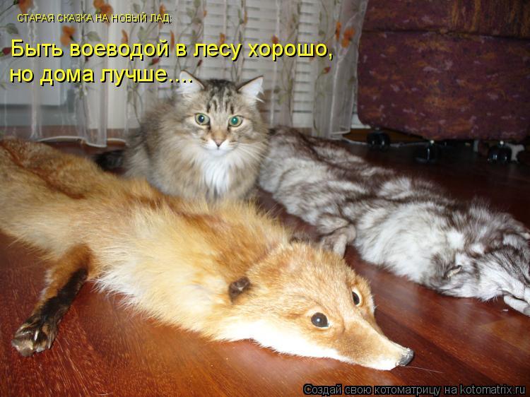 Котоматрица: СТАРАЯ СКАЗКА НА НОВЫЙ ЛАД: Быть воеводой в лесу хорошо, но дома лучше....