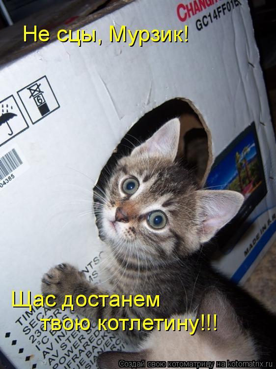 Котоматрица: Не сцы, Мурзик! Щас достанем  твою котлетину!!!