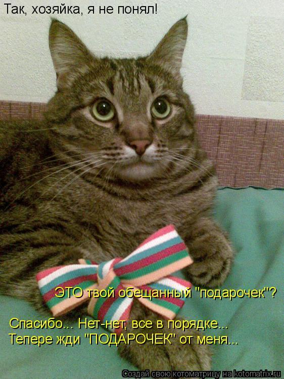 """Котоматрица: Так, хозяйка, я не понял! ЭТО твой обещанный """"подарочек""""? Спасибо... Нет-нет, все в порядке... Тепере жди """"ПОДАРОЧЕК"""" от меня..."""