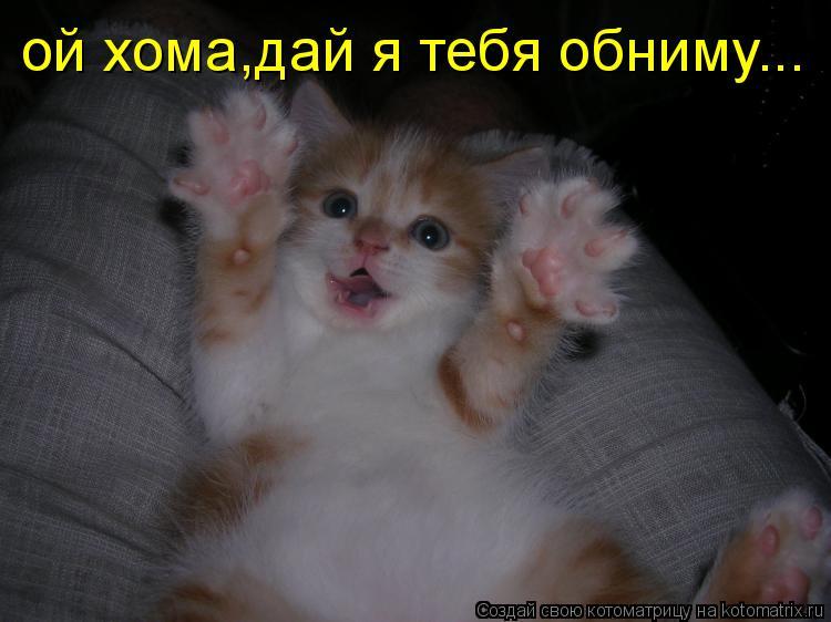 Котоматрица: ой хома,дай я тебя обниму...