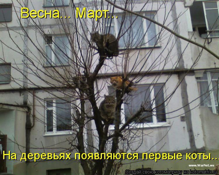 Котоматрица: Весна... Март... На деревьях появляются первые коты...