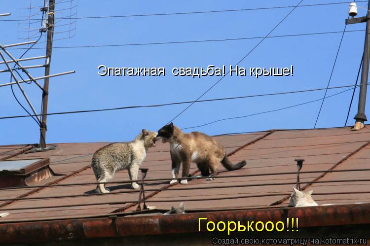Котоматрица: Эпатажная  свадьба! На крыше! Гоорькооо!!!
