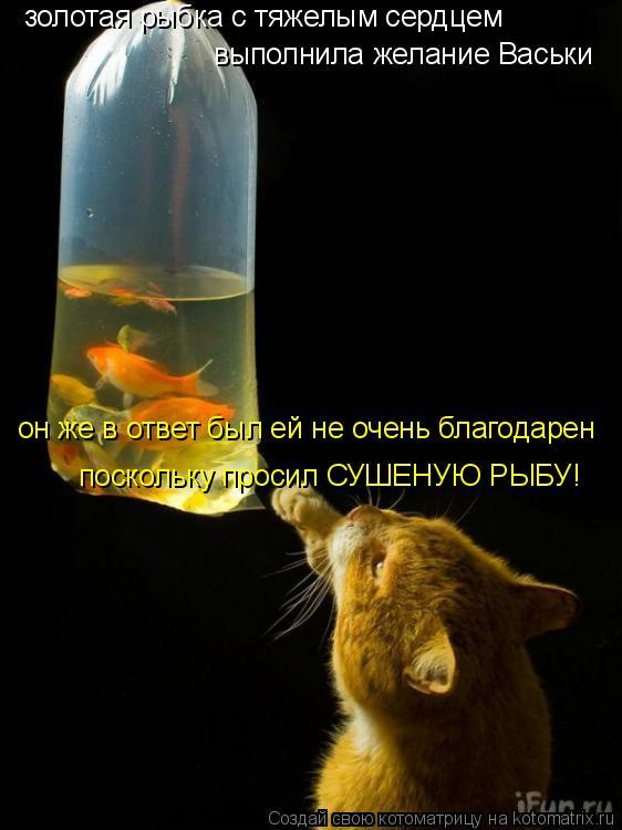 Котоматрица: золотая рыбка с тяжелым сердцем  выполнила желание Васьки он же в ответ был ей не очень благодарен поскольку просил СУШЕНУЮ РЫБУ!