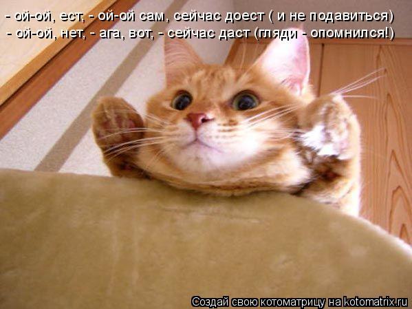 Котоматрица: - ой-ой, ест, - ой-ой сам, сейчас доест ( и не подавиться) - ой-ой, нет, - ага, вот, - сейчас даст (гляди - опомнился!)