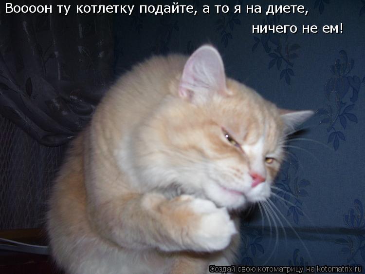 Котоматрица: Воооон ту котлетку подайте, а то я на диете,  ничего не ем!