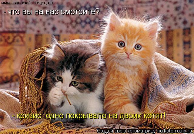 Котоматрица: - что вы на нас смотрите? - кризис, одно покрывало на двоих котят!
