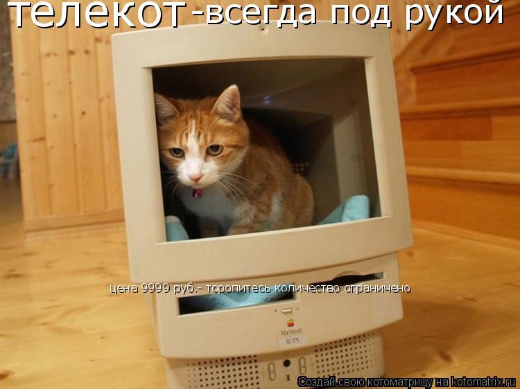 Котоматрица: телекот -всегда под рукой цена 9999 руб.- торопитесь количество ограничено