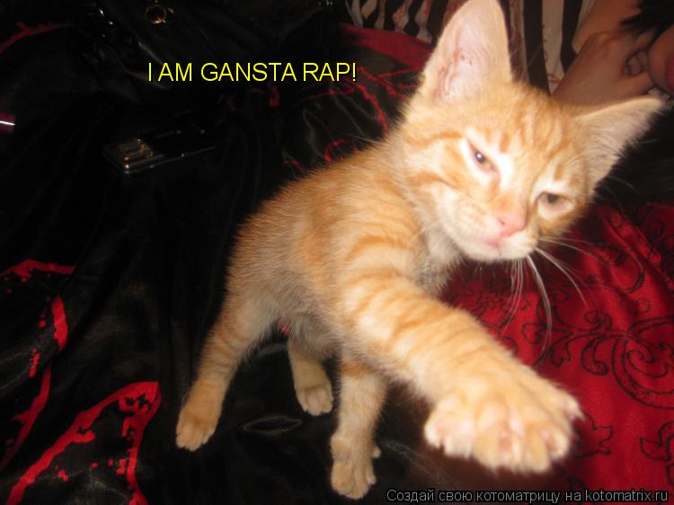 Котоматрица: I AM GANSTA RAP!