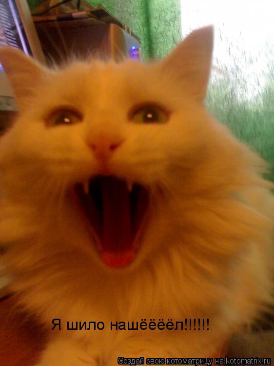 Котоматрица: Я шило нашёёёёл!!!!!!