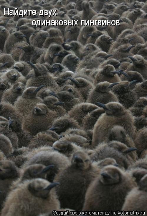 Котоматрица: Найдите двух одинаковых пингвинов