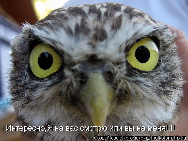 Котоматрица: Интересно,Я на вас смотрю или вы на меня!!!!