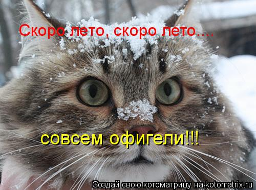 Котоматрица: Скоро лето, скоро лето.... совсем офигели!!!