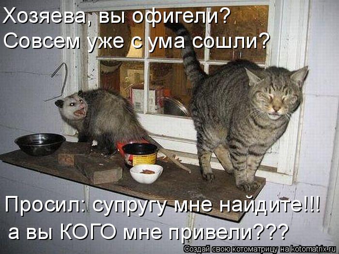 Котоматрица: Хозяева, вы офигели? Совсем уже с ума сошли? Просил: супругу мне найдите!!! а вы КОГО мне привели???
