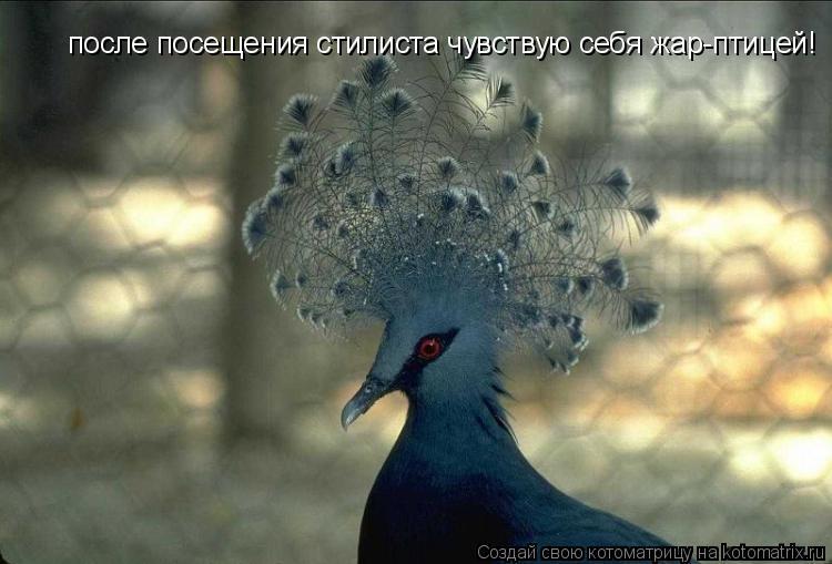 Котоматрица: после посещения стилиста чувствую себя жар-птицей!