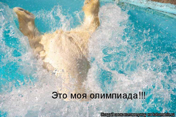Котоматрица: Это моя олимпиада!!!